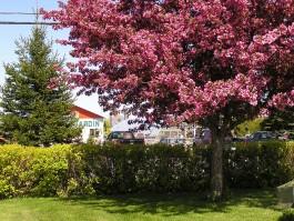 Pépinière Montcalm - Centre de jardin
